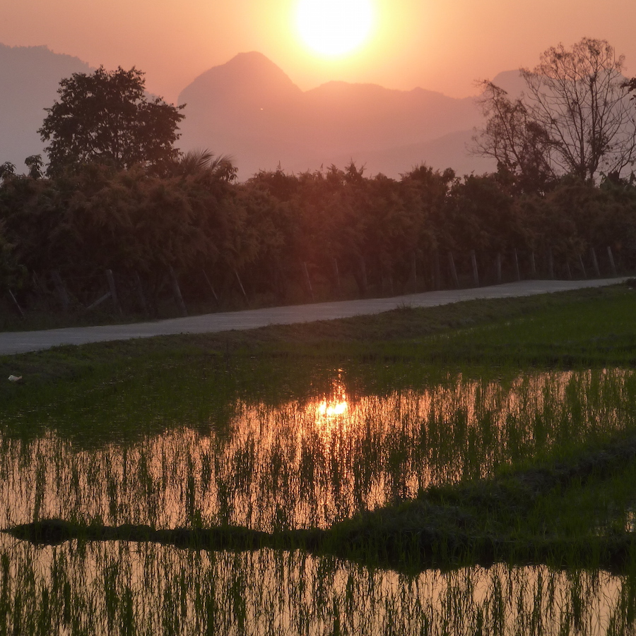 Rice Paddy Sunset