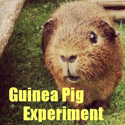 Guinea Pig Experiment Homepage